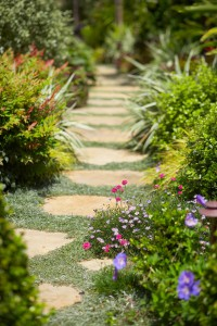 Stone Pathway of Grasses and Flowers