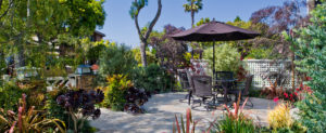 Outdoor Living With Plant Life