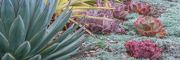 Landscape Design Succulents