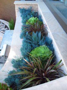 Succulent Landscape Design