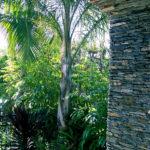 Tropical Stone Arch Landscape
