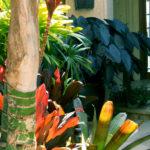 Tropical Landscape Colors