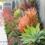 Succulent Landscape Various Colors
