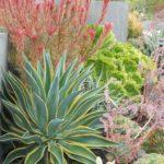 Bright Succulent Design