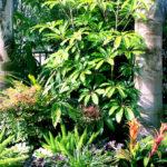 Tropical Landscape Design Trees