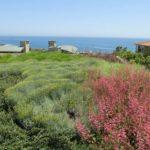 Ocean View Landscape Plants