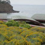 Ocean View Modern Landscape