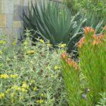 Large Succulent Design