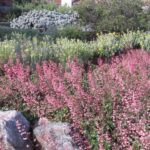 Pink and Yellow Landscape Design