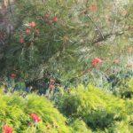 California Friendly Plants