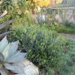 Landscape Succulent and Bush