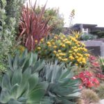 Succulents and Yellow Plant