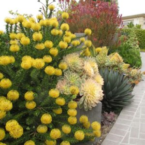 Yellow Plant and Bright Succulents