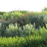 Landscape Greenery