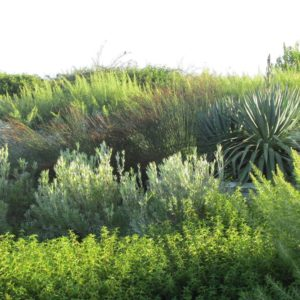 Grasses and Large green Plants
