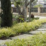 Stepping Stones and Plants