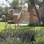 Italian Villa Stair Case and Lavender