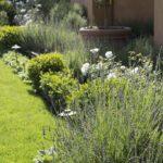 Sideyard Greenery
