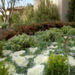 Landscape Mediterranean Bushes