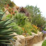 Ocean Pathway with Succulent
