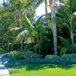 Tropical Palm Tree Exterior