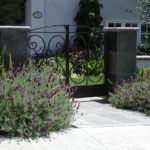 Lavender and Front Gate