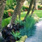 Tropical Palm Tree Landscape