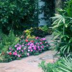 Tropical Plants and Florals