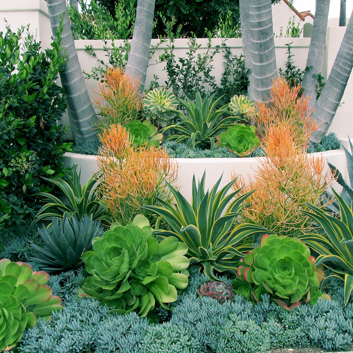 Tropical gardens for Exotic garden designs